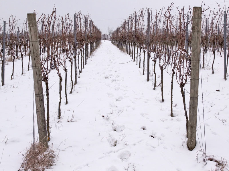 Wine in snow
