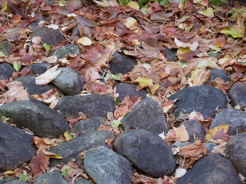 Stones and dry leaves